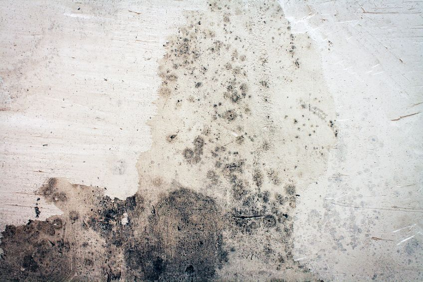 17002653 - moldy wall full frame creating a grunge background